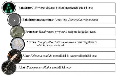 Ökotoxikológiai metodika vke metagenom BME