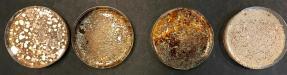 Összes tenyészthető mikrobaszám meghatározása szelektív tápagarokon